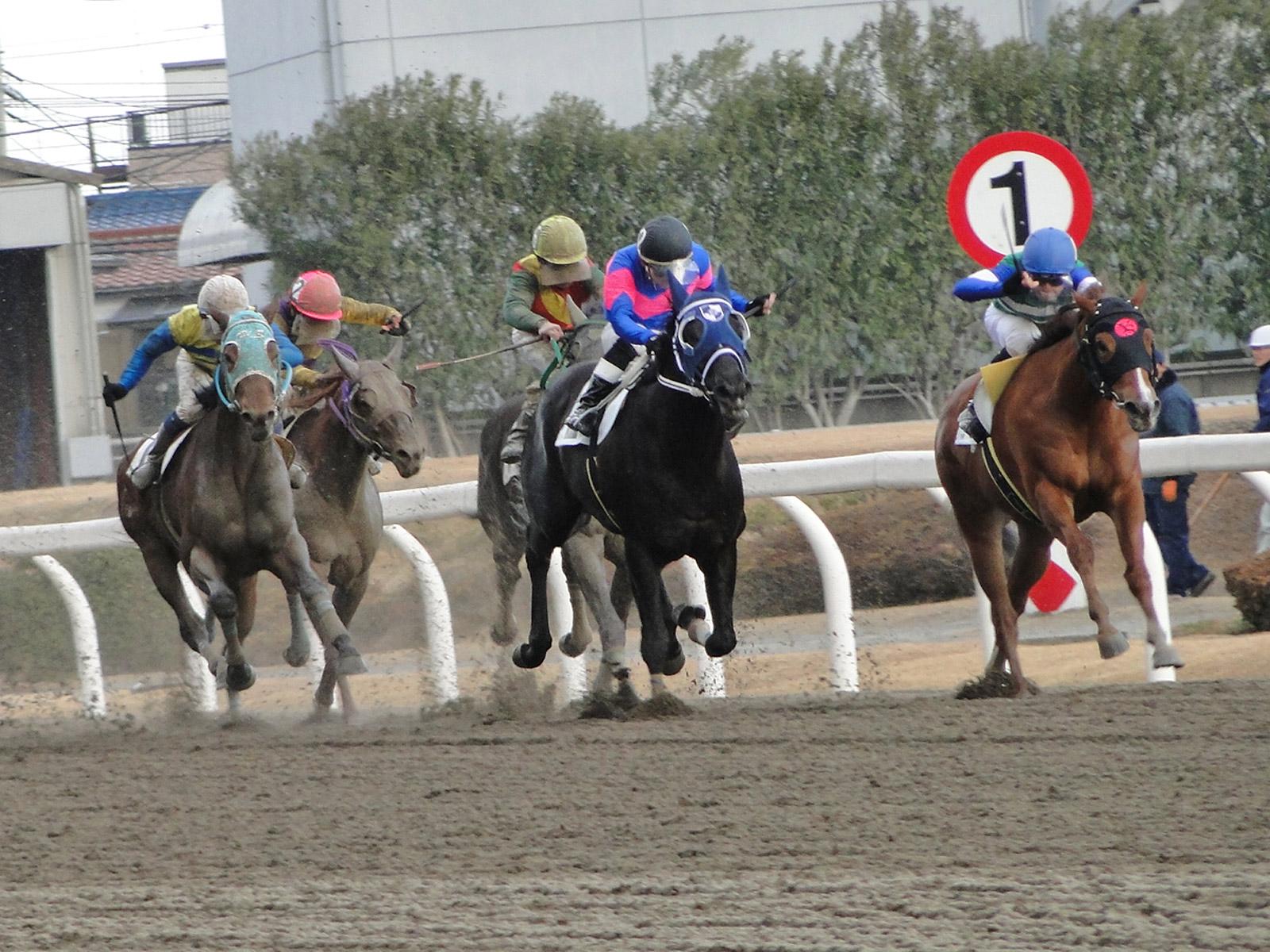 地方競馬軸馬